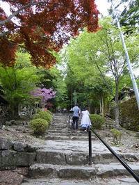 ひめちゃご75 英彦山神宮 奉幣殿 - ひもろぎ逍遥