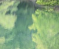 緑に染まる。。。 - 万願寺通信