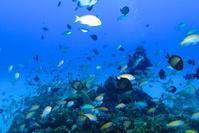 アマミホールへ 加計呂麻島一周 奄美大島南部ダイビング - 奄美大島 ダイビングライフ    ☆アクアダイブコホロ☆