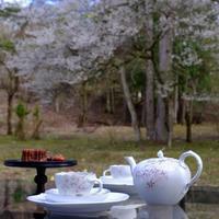 桜のTea Time - カエルのバヴァルダージュな時間