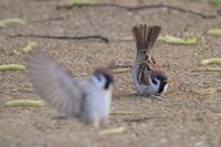 アオバト滞在 - 野鳥写真日記 自分用アーカイブズ
