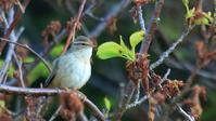 日本海の離島の鳥達 - Life with Birds 3