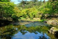 新緑(弥彦公園) - くろちゃんの写真