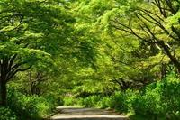 新緑賛歌(神戸市立森林植物園) - 案山子の写真紀行