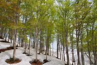 若葉と残雪 - 松之山の四季2