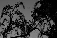 見上げた空に - ホンテ島 日記