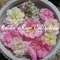 Koiko's Rose Collection 2017 恋子のバラ - 恋子のガーデニング日記