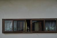 日奈久の猫-2 - Mark.M.Watanabeの熊本撮影紀行