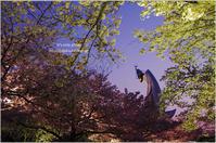 万博の夜桜と観覧車*Ⅰ - It's only photo