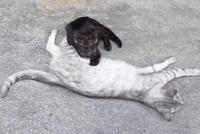 野良猫 - 行きたいところに行きたい
