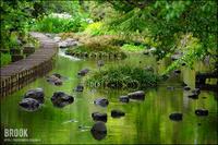 美しき川の流れ - すずちゃんのカメラ!かめら!camera!