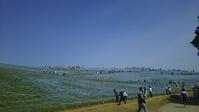 ネモフィラ ひたち海浜公園 - 遊ぶろうぐ