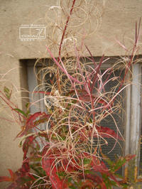 植物的生活796 - Atelier Botanique COCA-Z
