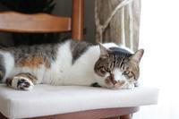 DIC川村記念美術館の庭園へ - きょうだい猫と仲良し暮らし