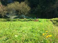 4月15日 親子クラス 【はるをさがそう♪】 - めぐみと森のようちえん