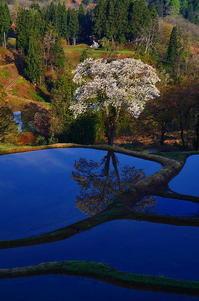 棚田の桜 - 風の香に誘われて 風景のふぉと缶