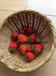 和菓子屋・つくし - カキリマ・バリ島・アジア雑貨・エスニック衣料のネットショップ店主の日記