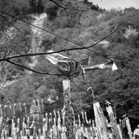 泳ぎの苦手な鯉のぼり - Film&Gasoline