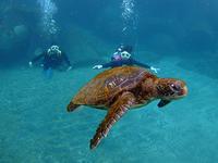 まだまだ賑やか!GWは続きます(^^) - 八丈島ダイビングサービス カナロアへようこそ!