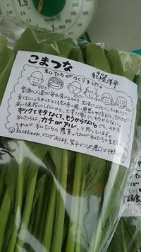 小松菜の出荷が始まりました(^O^) - 畑と笑いと長靴と