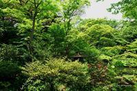 新緑が目立つ---自由散歩@撮影--2 - くにちゃん3@撮影散歩