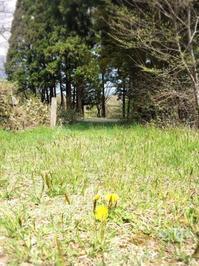 2017年のGW3 北広島編ずんどこ湿地帯を歩く - ホリー・ゴライトリーな日々