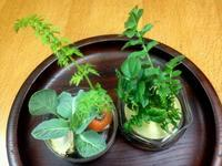 ☆まるで寄せ植えの鉢のように楽しい☆ - ガジャのねーさんの  空をみあげて☆ Hazle cucu ☆