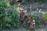 カムカムエブリバディ - 動物園へ行こう