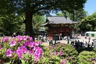 根津神社 - 絵を描きながら
