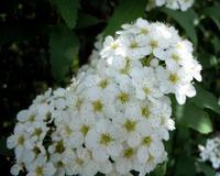 路傍の花、樹々の鳥(160) ~ 秋には赤い実のなる花 ~ - 大屋地爵士のJAZZYな生活