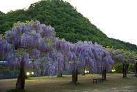 和気 藤公園 - とりあえず撮ってみました