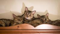 食器棚の上に集合 - 猫と夕焼け