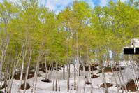 五月晴れ - 松之山の四季2