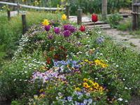 里山の小さな花畑。。。 - エンジェルの画日記・音楽の散歩道