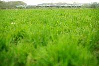 bright green - advance*k