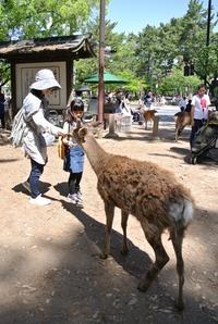 奈良でランチ - いくつになってもカバン好き