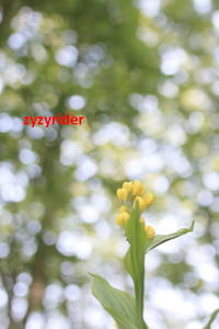 くらい林のなかに - ジージーライダーの自然彩彩