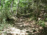 大阪府民の森・なるかわ園地 - これから見る景色