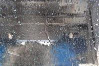 雨だ 雨だ - BLACK BEANS Blog | 黒豆日記