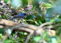 山の森の野鳥 - 蝶鳥写楽