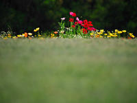 Garden - 1/365 - WEBにしきんBlog