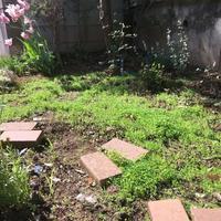 クローバーの小道 - わたしの台所時間,庭時間