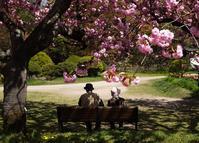 共に咲き、共に散る - 木を見て森も見たい