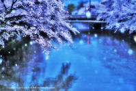 今年の桜♯1 - あ お そ ら 写 真 社