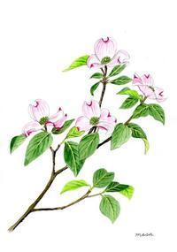 今年は花が少なかった「花水木」 - がちゃぴん秀子の日記