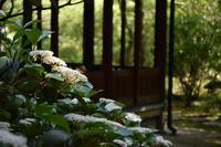 ◆花情報◆白山木(はくさんぼく)の花 - 名鉄犬山ホテル情報