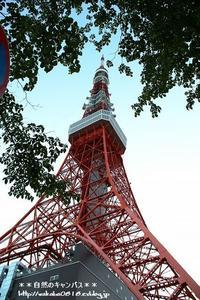 東京タワ-周辺スナップ(マリオカート発見\(◎o◎)/) - 自然のキャンバス