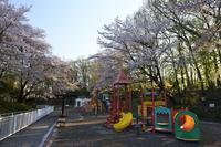 北本市子供公園 桜 - photograph3