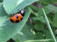 虫との出会い…相模川三段の滝周辺と勝坂歴史公園 - 散歩ガイド