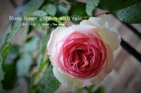 """Holiday's Rose inner garden with rain ...5/9thu"" - SHOP ◆ The Spiralという館~カフェとインポート雑貨のある次世代型セレクトショップ~"